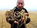 1.57亿亩小麦受旱
