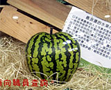 日本心形西瓜