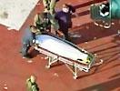 现场实拍:迈克尔杰克逊遗体被直升机转移