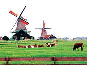 荷兰乡村风光 返璞归真的田园牧歌