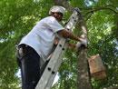 将爱心鸟巢挂到树上