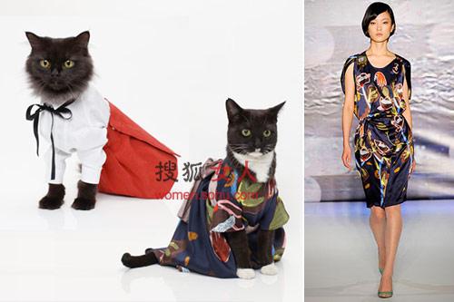 代言人就更让人称奇,t台上的衣服放到广告上来,模特居然全是小猫咪.