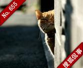 架云梯救猫:尊重生命or浪费