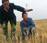 耕地缺少有效灌溉,遇旱便成灾