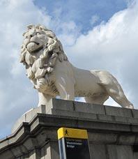 神态凝重的狮子