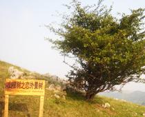 《山楂树之恋》