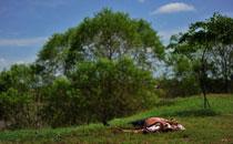 三等奖:墨西哥毒品战争死难者