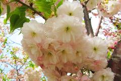 花丛深处觅生机 与花季北京亲密接触