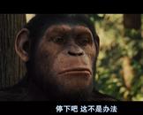 最新大片,猩球崛起,免费看电影