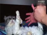 超可爱猫咪能和你一起玩