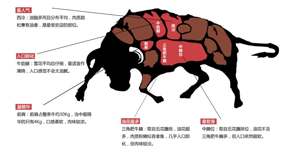 牛肉示意图
