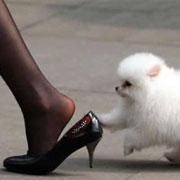 浅谈关于透明丝袜与大腿间关系