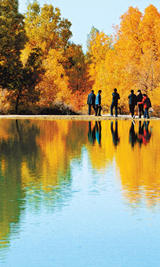 金塔沙漠森林公园秋色动人 胡杨林堪比额济纳