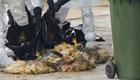 台湾:疾控部门将为感染禽流感大陆旅客埋单