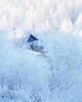 额尔古纳观雾凇奇景,拥抱绝美冬日