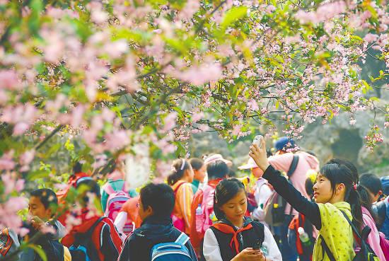 春游需格外提防花粉过敏