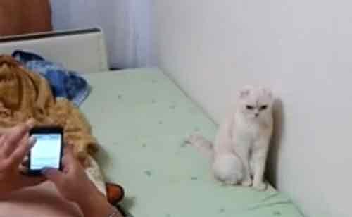 俄罗斯小猫在听到国歌之前是正常状态(视频截图)