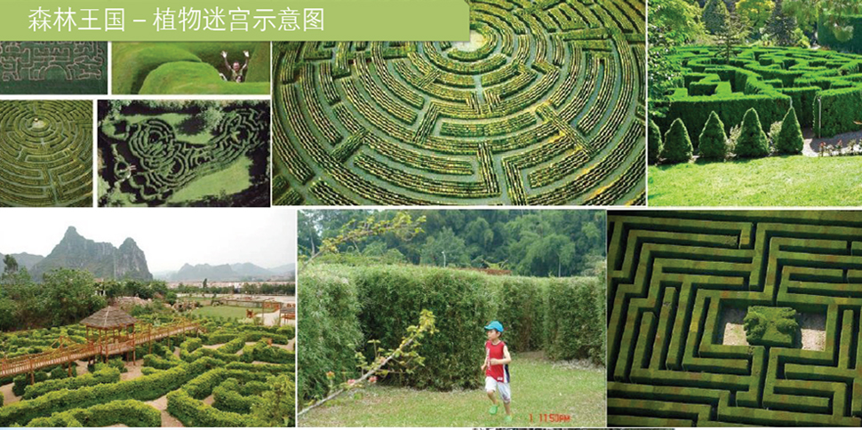 森林王国-植物迷宫示意图图片
