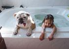 小女孩与斗牛犬