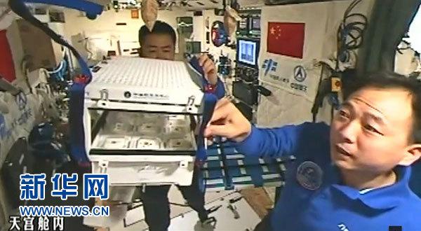 11月11日,新华社太空特约记者、航天员景海鹏(右)在天宫二号介绍太空中的植物栽培情况。这是航天员在天宫舱内查看白色装置内栽培的植物。新华社发(中国航天员中心提供)