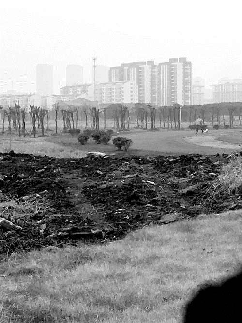 """江苏常州""""毒地""""上种植的树木枯死。"""
