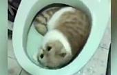 猫咪霸占马桶睡觉遭训斥
