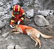 搜救犬累瘫了
