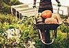 有机食品是否就等于农家菜?
