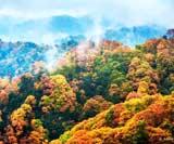 亚洲最大彩林!也是中国红叶第一山