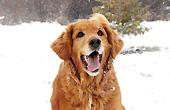 狗生的第一场雪