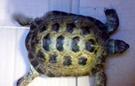 旅行龟龟半年走300米